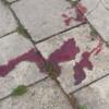 Blutnacht in Güstrow